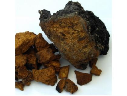 Wild Chaga Mushroom- Inonotus Obliquus